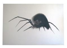 Araña Tintaguada
