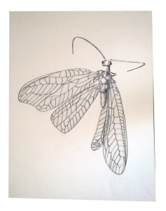 Insecto 1 paper Tinta